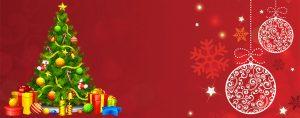 Cây thông Noel có nguồn gốc từ đâu?